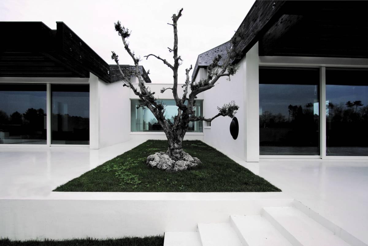 casa vista dall'esterno con ulivo